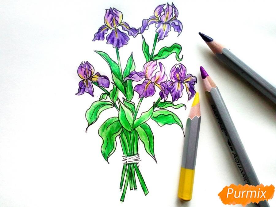 Рисуем букет ирисов цветными карандашами - шаг 7