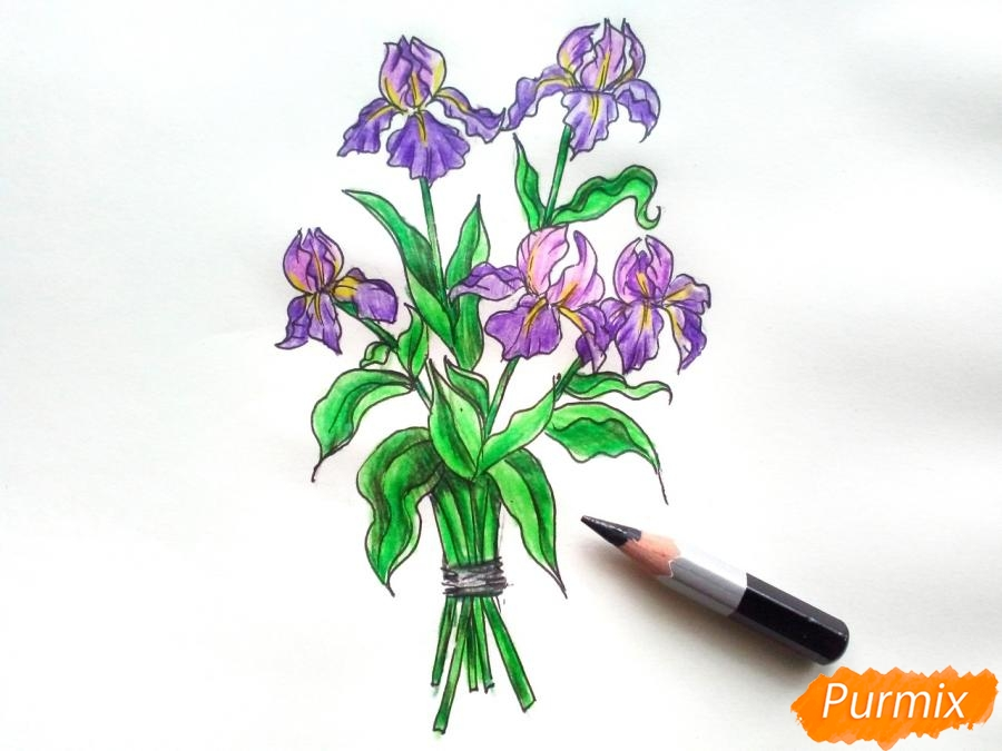 Рисуем букет ирисов цветными карандашами - шаг 8