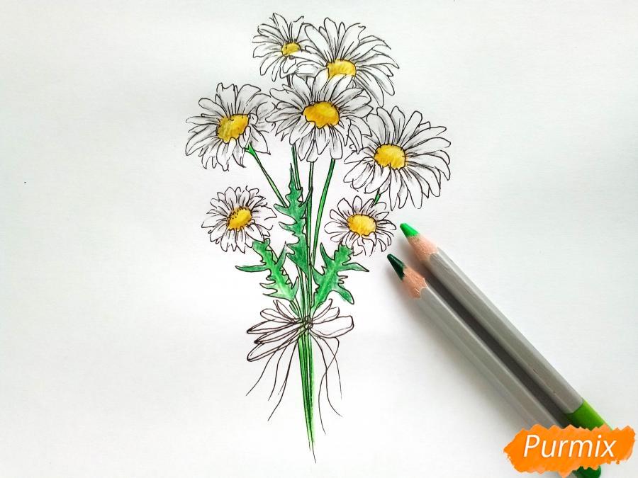 Рисуем букет ромашек цветными карандашами - шаг 5