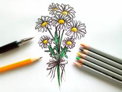 букет ромашек карандашом