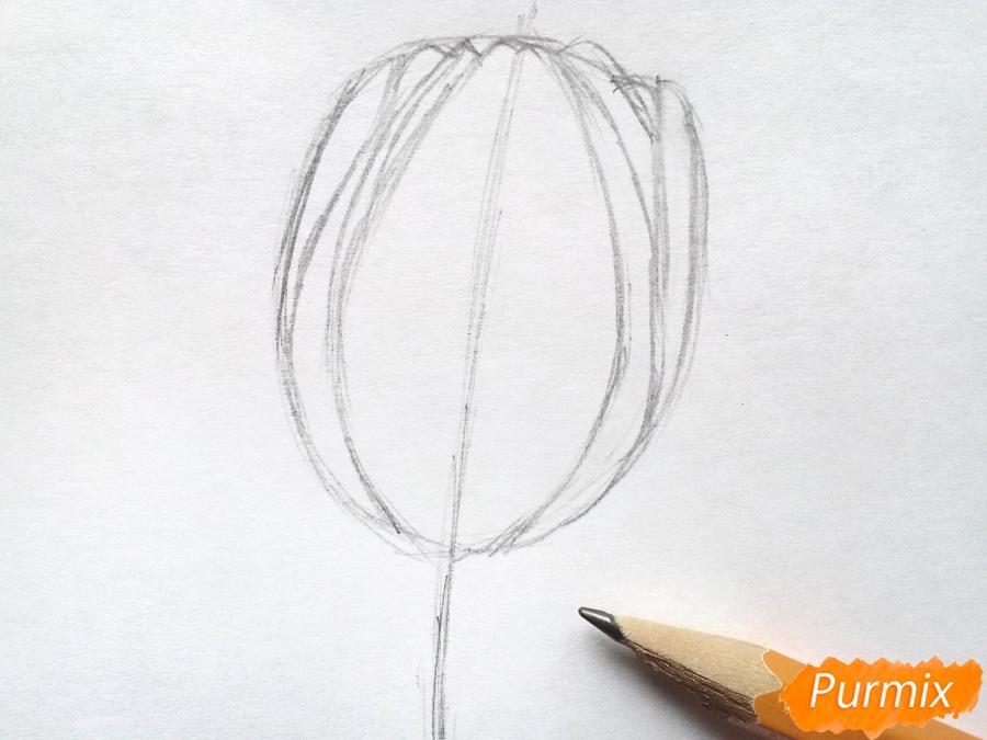Рисуем бутон тюльпана - шаг 2