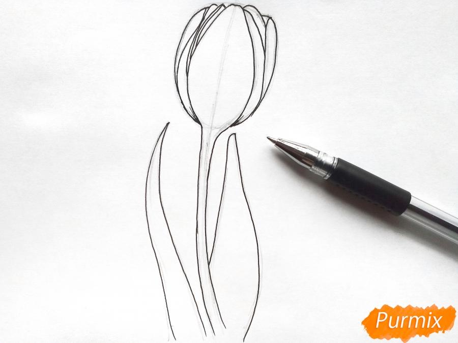 Рисуем бутон тюльпана - шаг 4