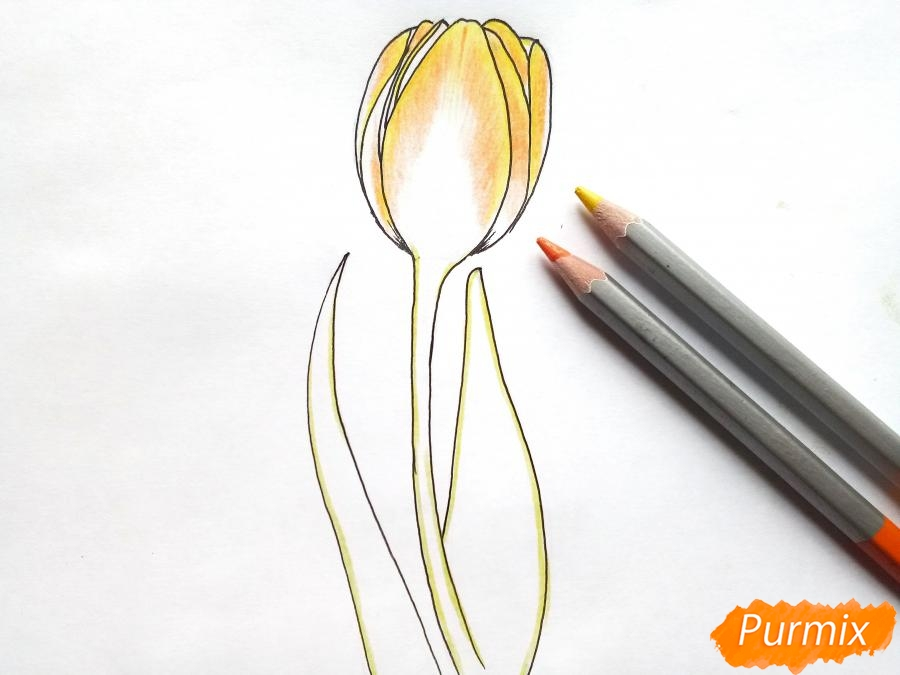 Рисуем бутон тюльпана - шаг 5