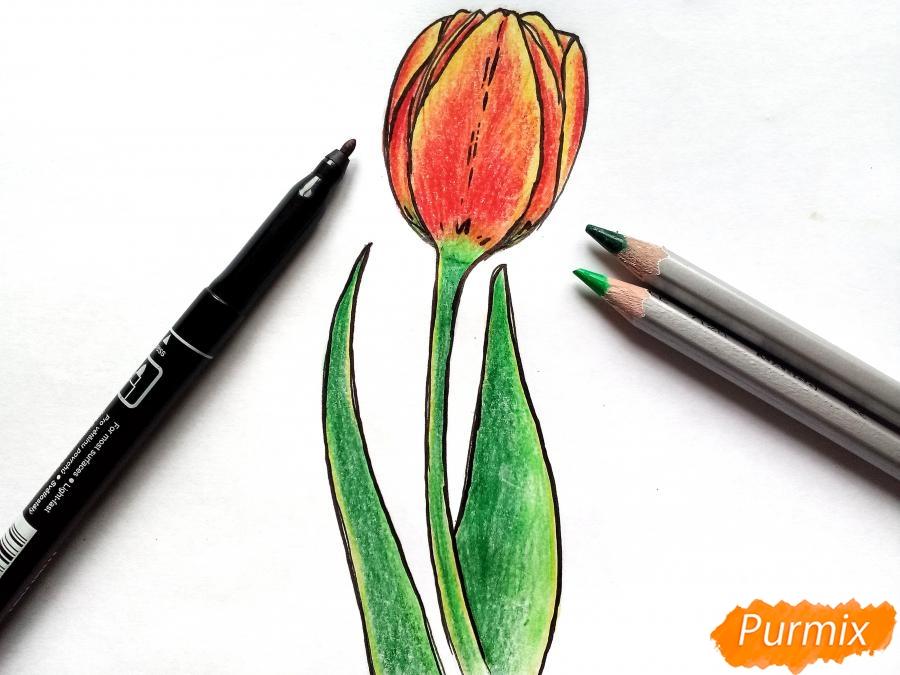 Рисуем бутон тюльпана - шаг 7