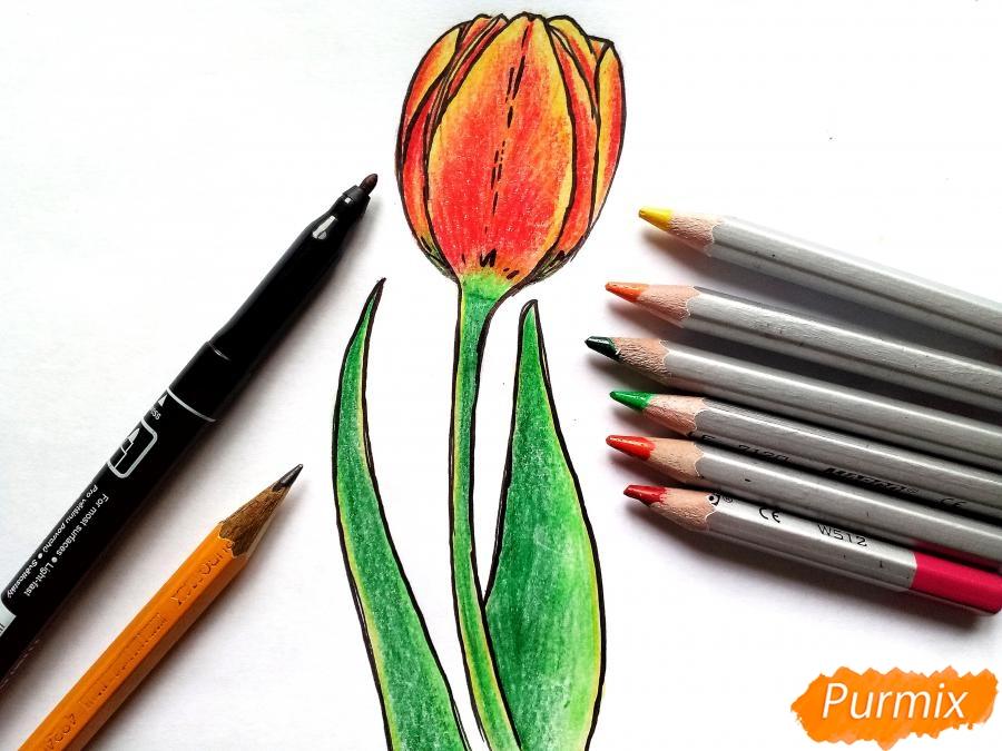 Рисуем бутон тюльпана - шаг 8