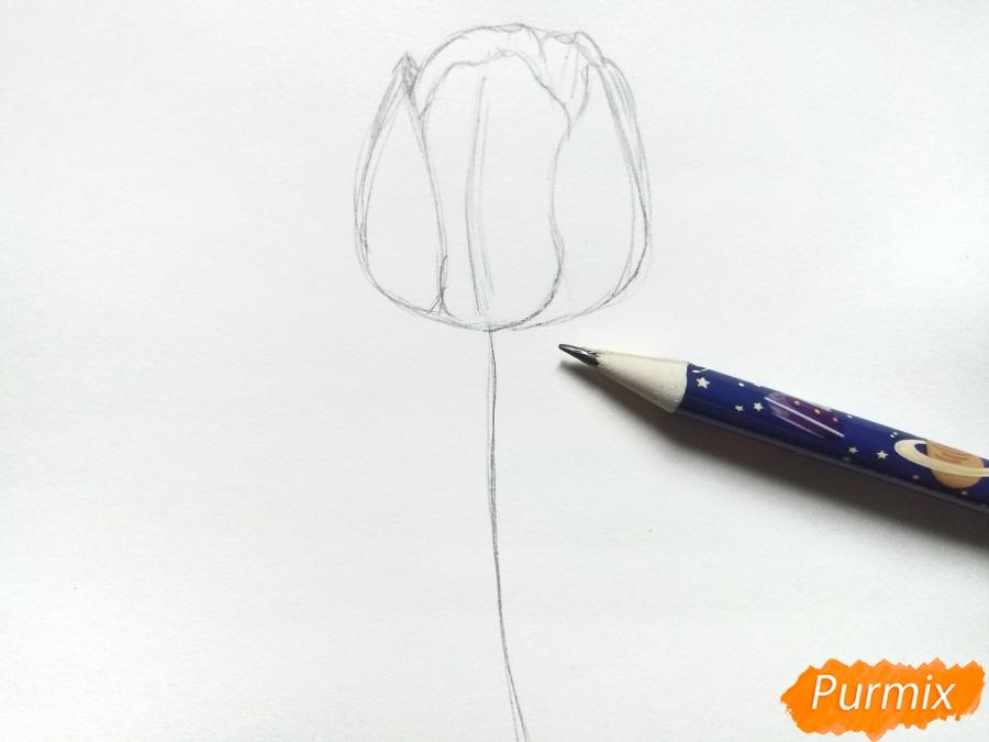 Рисуем  черный тюльпан - шаг 2