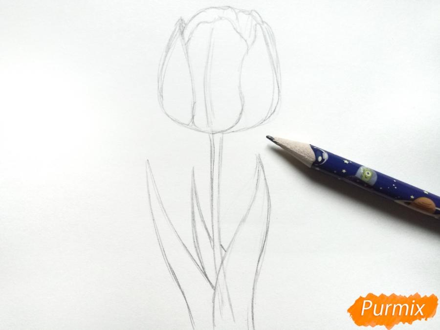 Рисуем  черный тюльпан - шаг 3