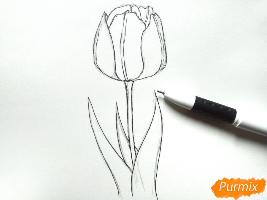 Рисуем  черный тюльпан - шаг 4