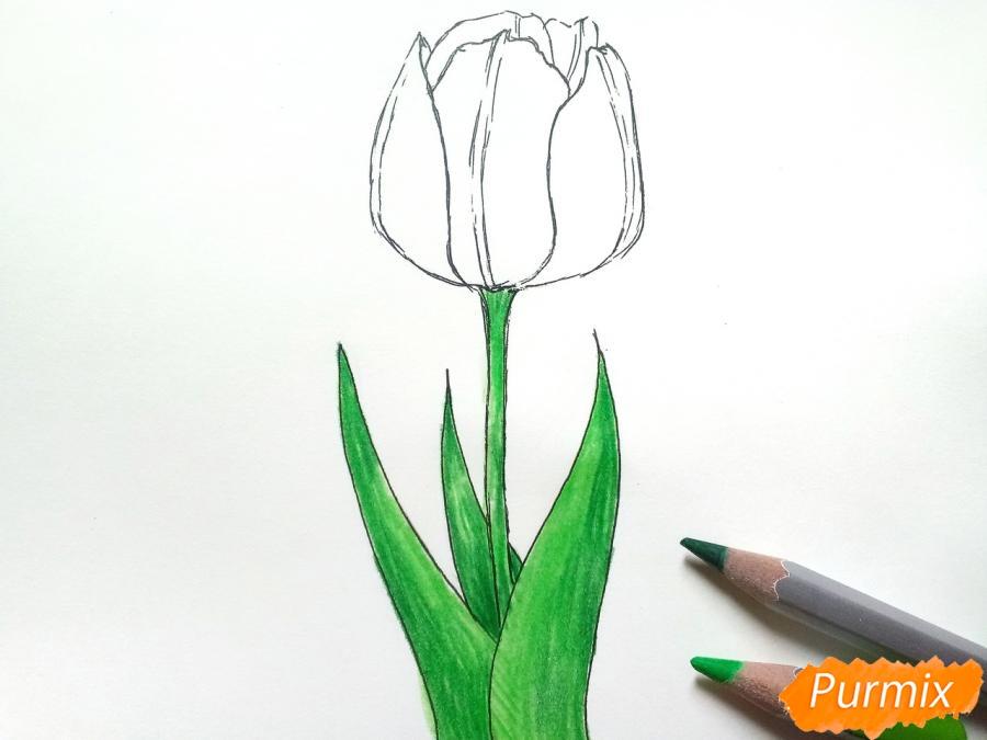 Рисуем  черный тюльпан - шаг 5