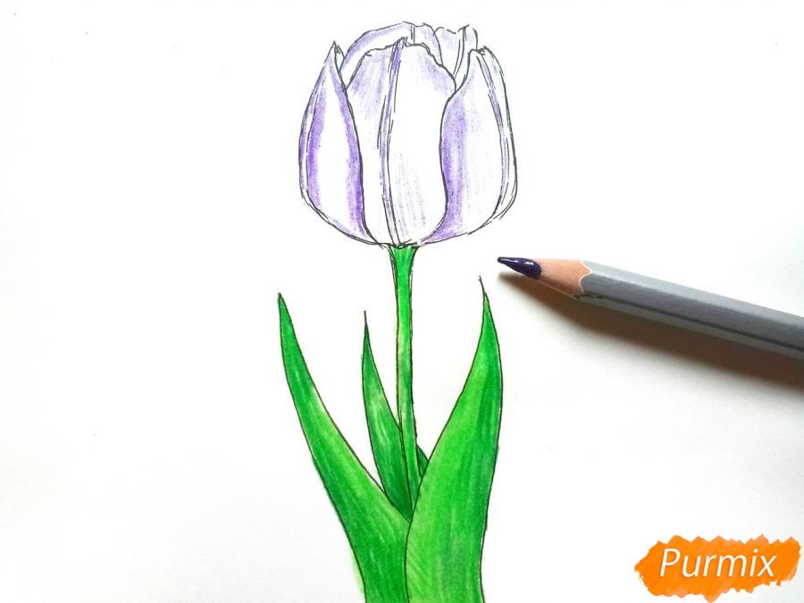 Рисуем  черный тюльпан - шаг 6
