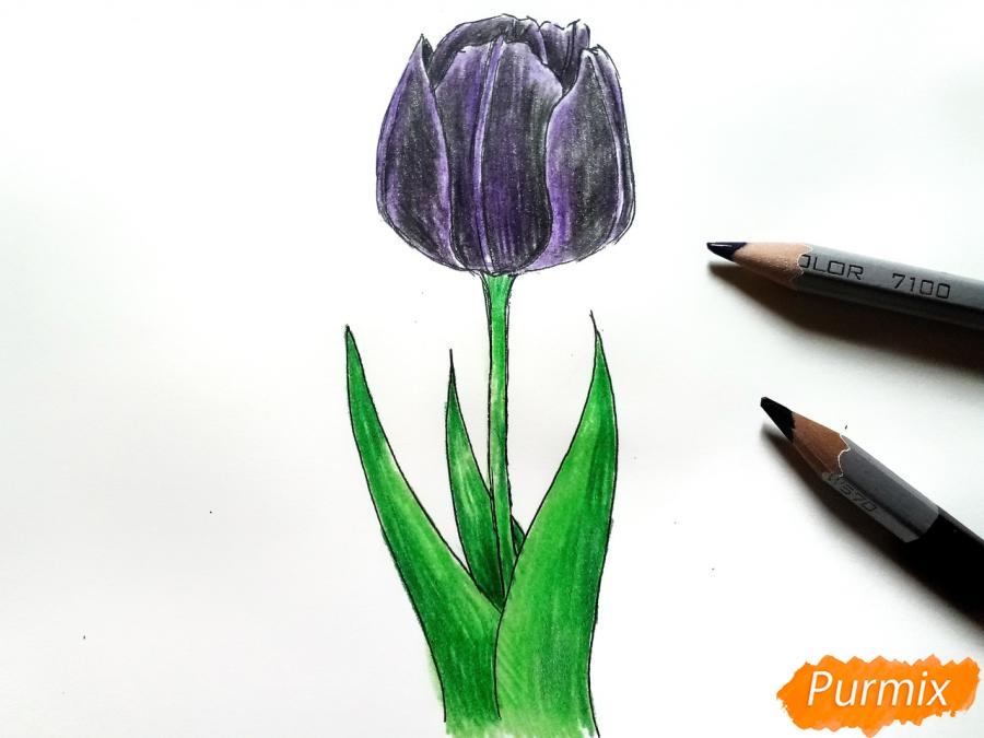 Рисуем  черный тюльпан - шаг 7