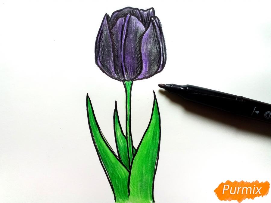 Рисуем  черный тюльпан - шаг 8