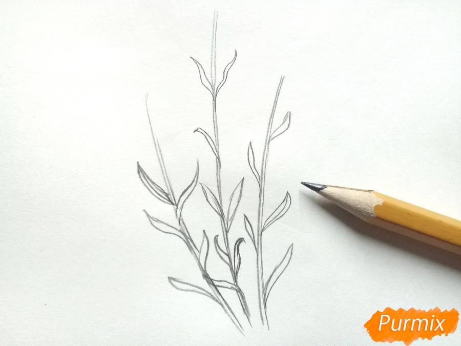 Рисуем цветы люпины - шаг 2