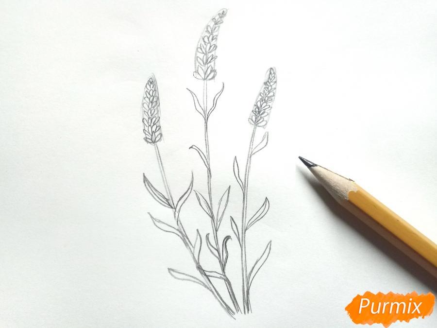 Рисуем цветы люпины - шаг 4