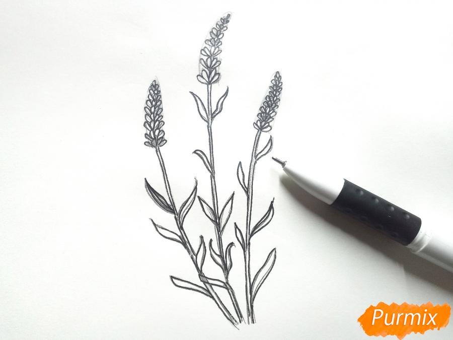 Рисуем цветы люпины - шаг 5