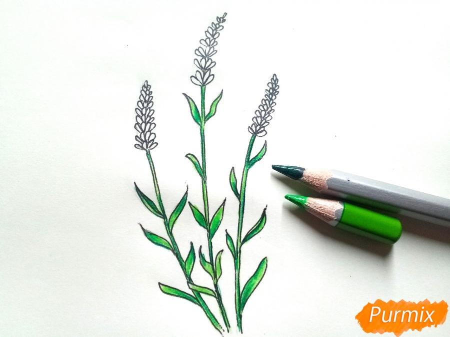 Рисуем цветы люпины - шаг 6