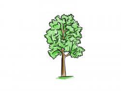 дерево осину