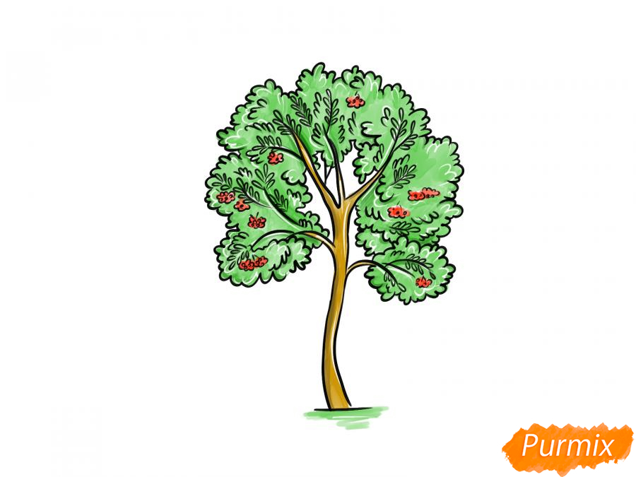 Рисуем дерево рябины - шаг 10