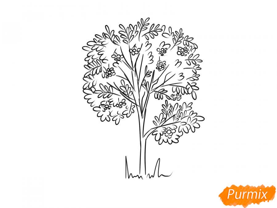 Рисуем дерево рябины осенью - шаг 7