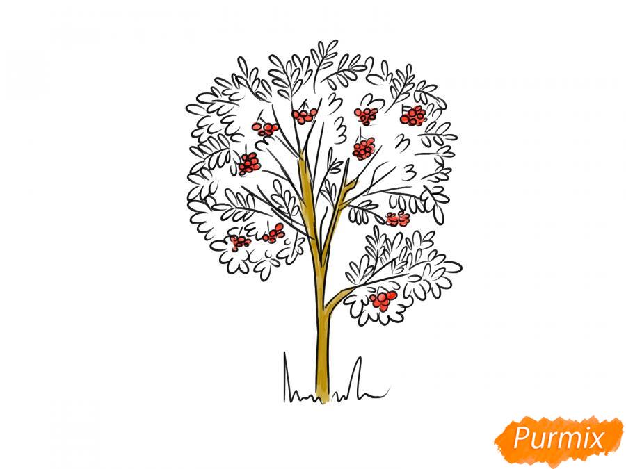 Рисуем дерево рябины осенью - шаг 8