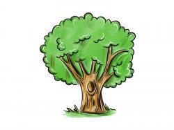 дерево с дуплом