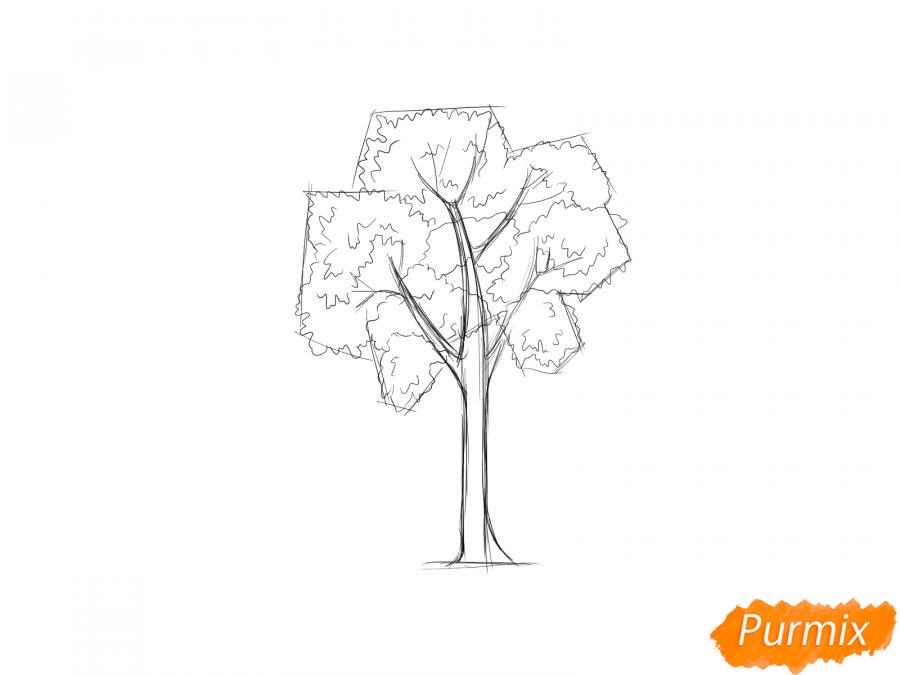 Рисуем дерево ясень - шаг 4