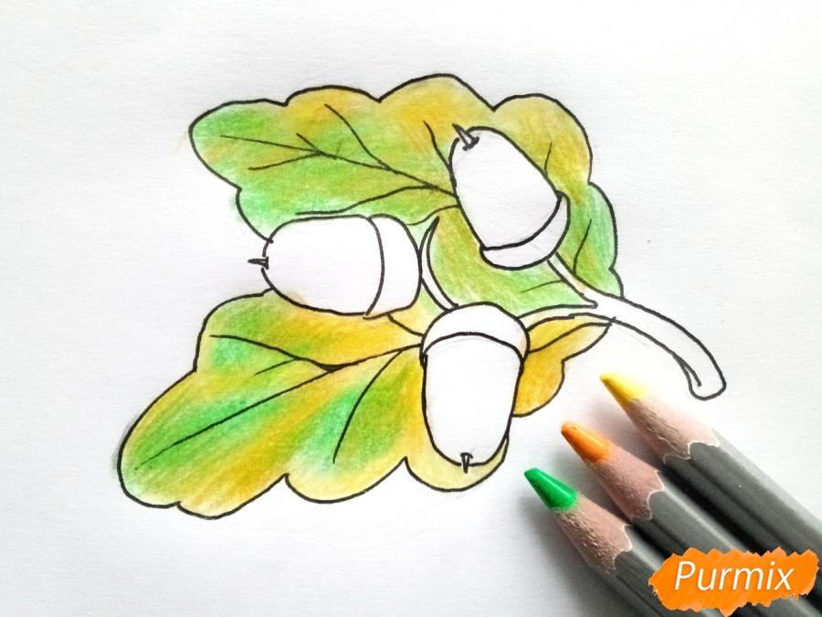 Рисуем дубовый лист с желудем - шаг 5