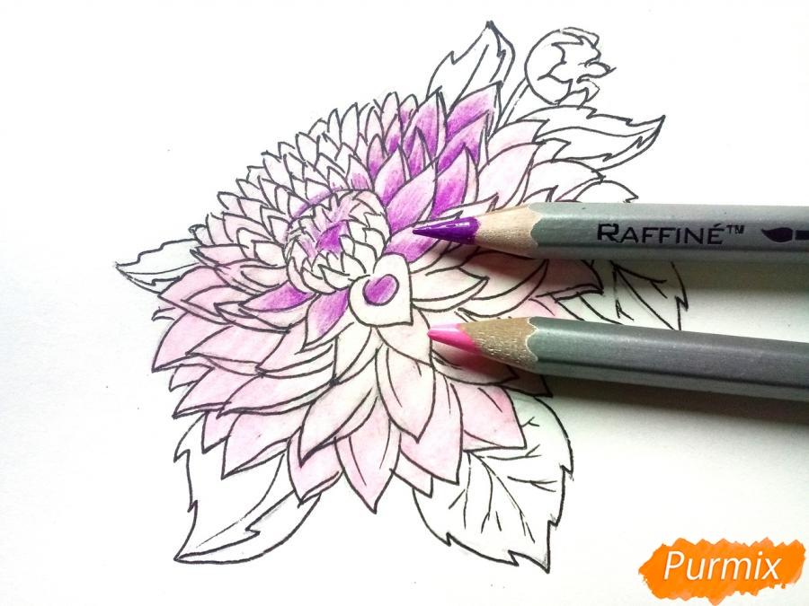 Рисуем цветок георгин - шаг 6