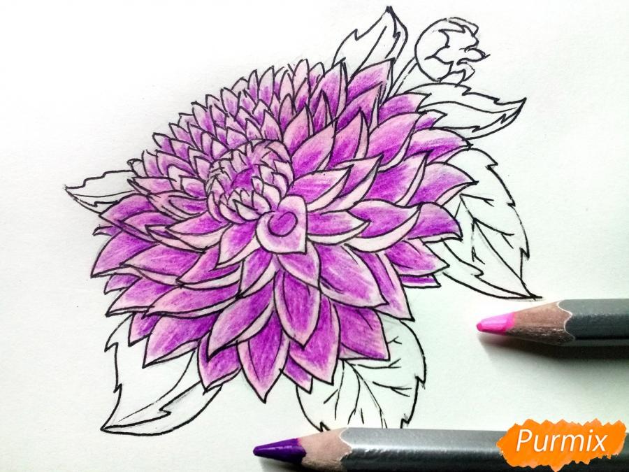 Рисуем цветок георгин - шаг 7