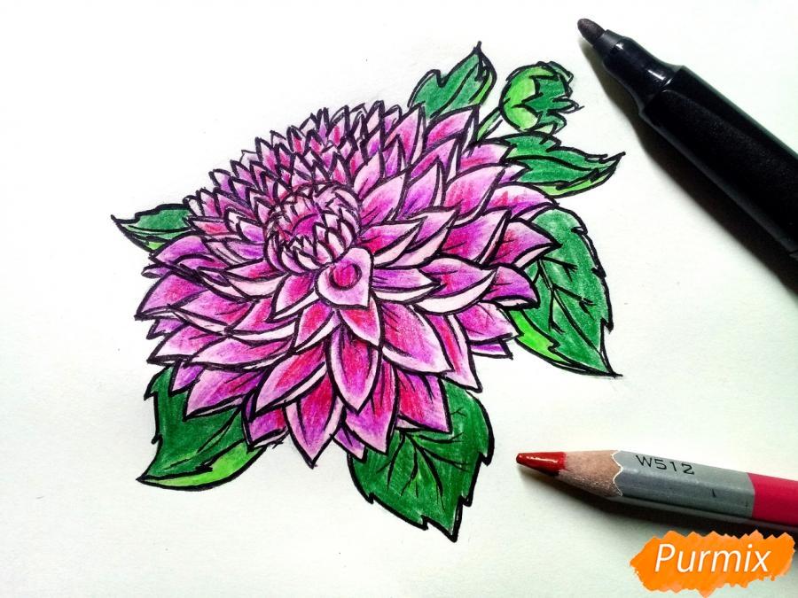 Рисуем цветок георгин - шаг 9