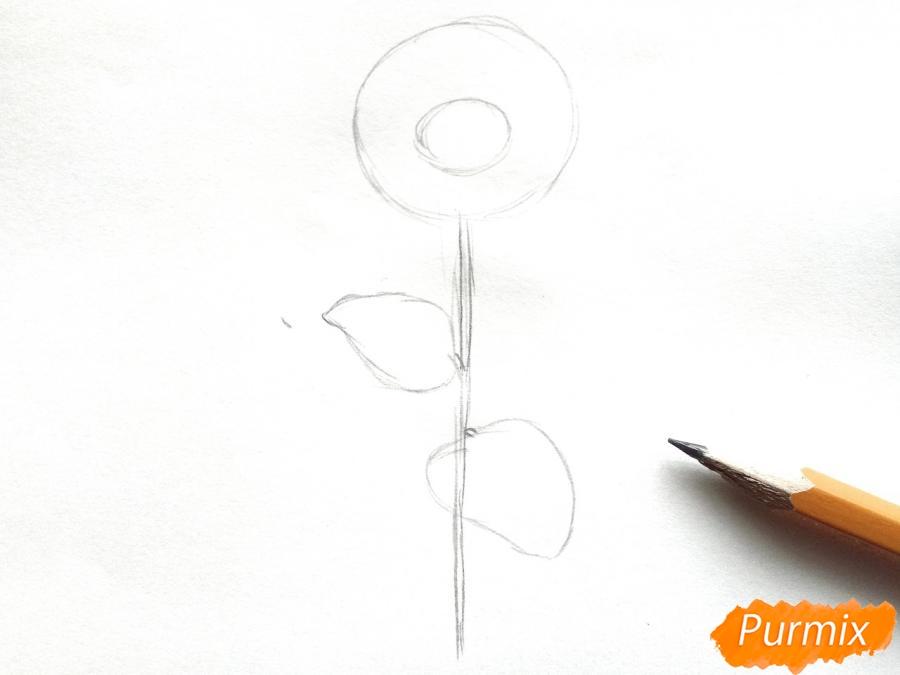 Рисуем герберы, букет гербер - шаг 2