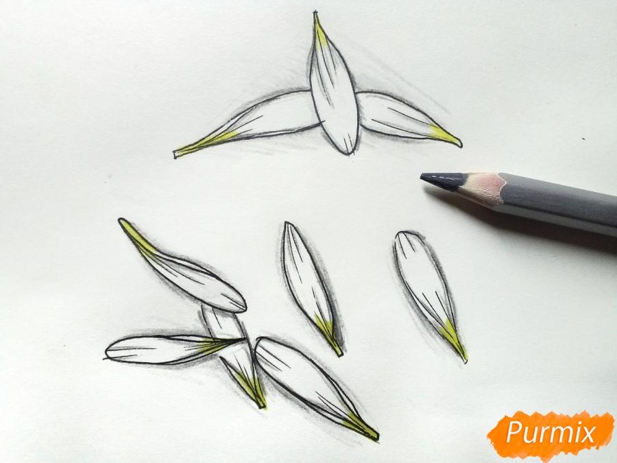 Лепестки ромашки - шаг 6