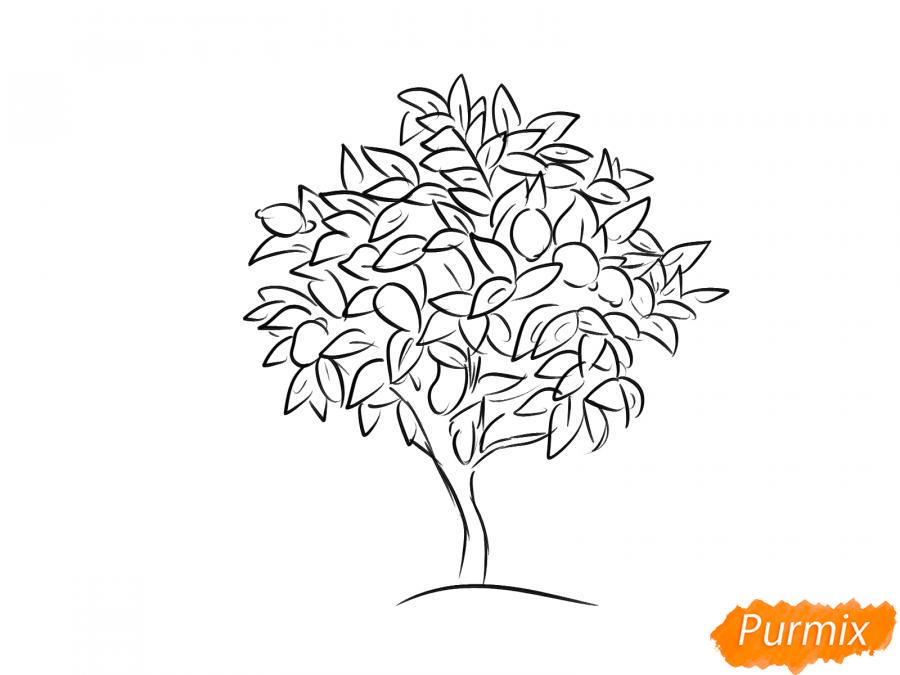 Рисуем лимонное дерево - шаг 5