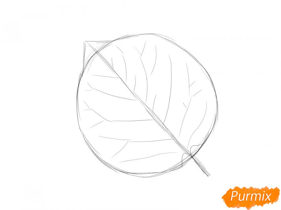 Рисуем лист абрикосы - шаг 2