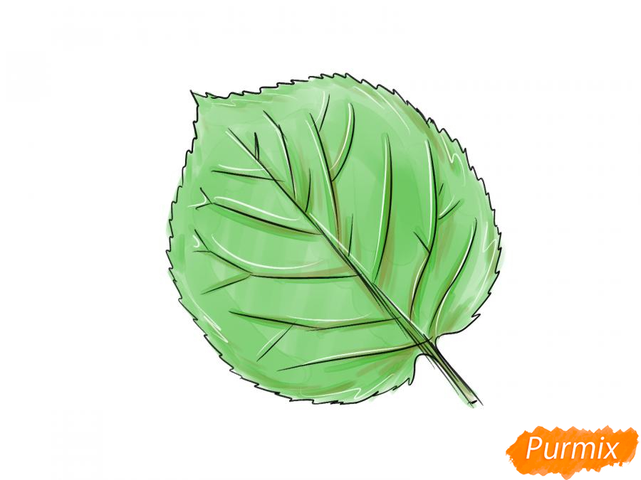Рисуем лист абрикосы - шаг 4