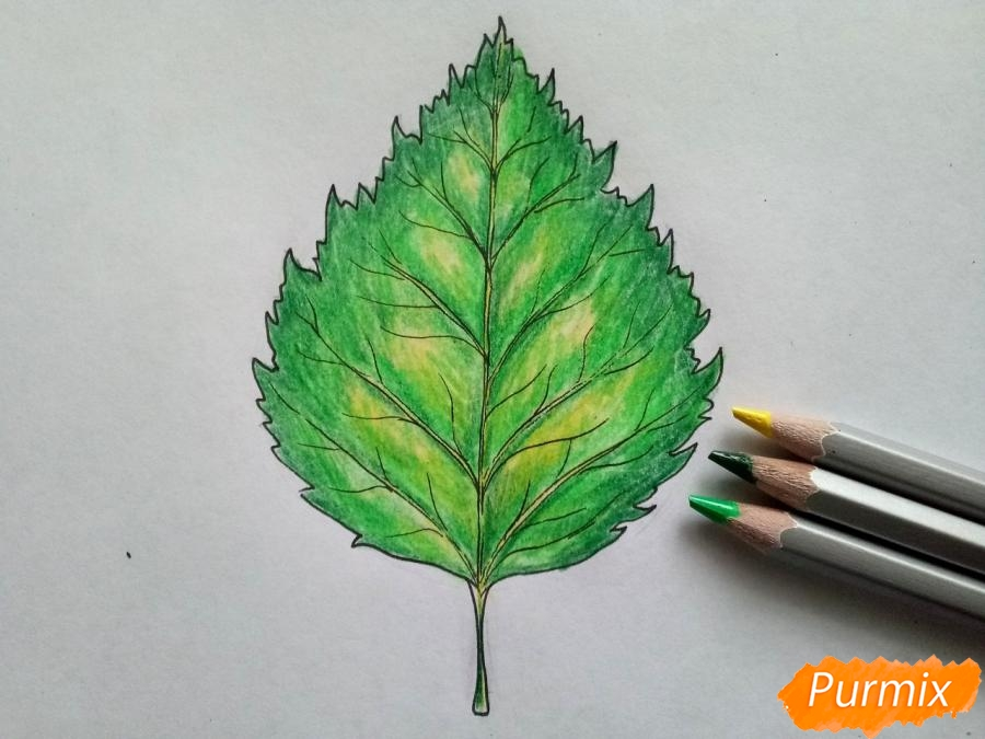 Рисуем лист березы карандашами - шаг 5