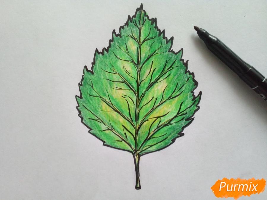 Рисуем лист березы карандашами - шаг 6