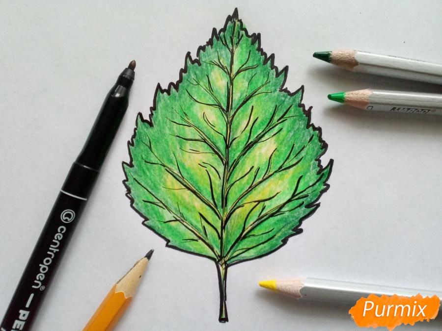 Рисуем лист березы карандашами - шаг 7