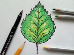 лист березы карандашом