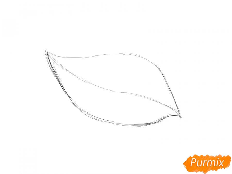 Рисуем лист груши - шаг 2
