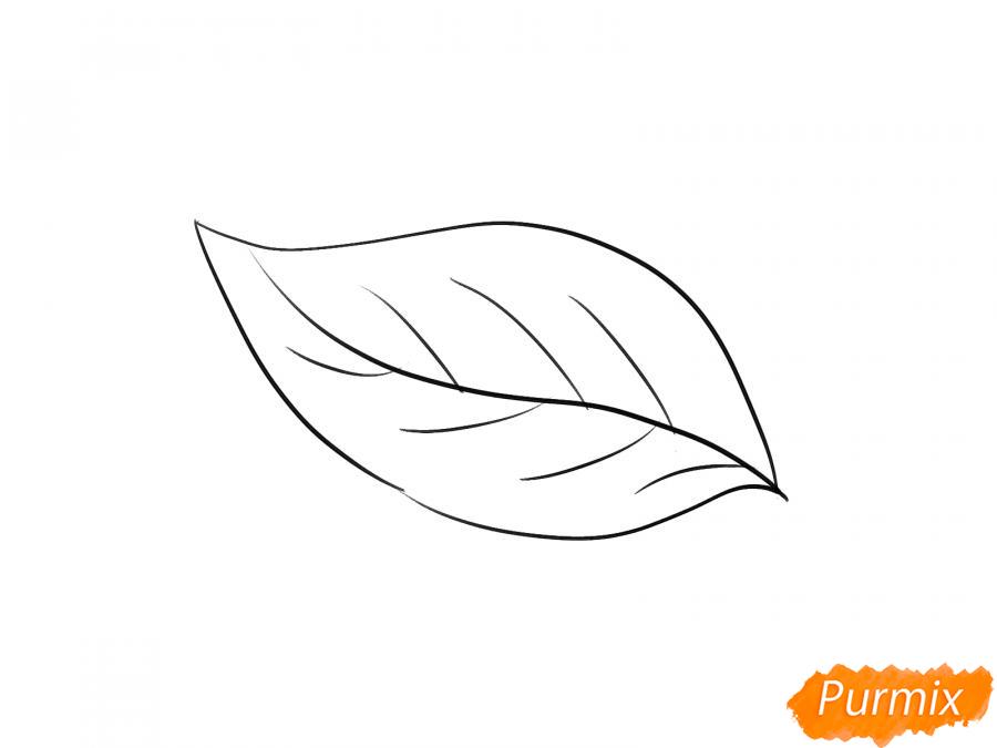 Рисуем лист груши - шаг 3