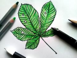 Фото лист каштана карандашом