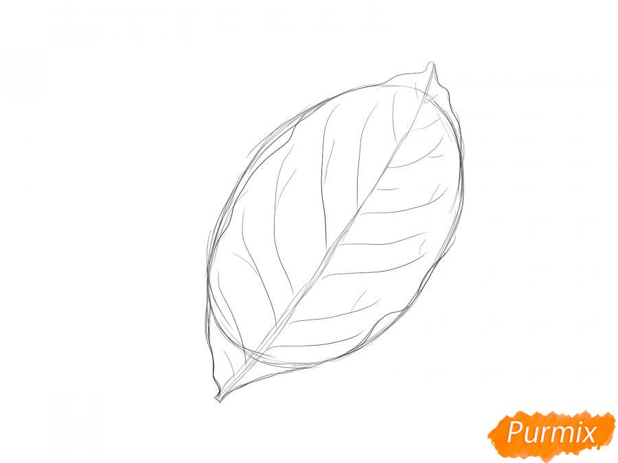 Рисуем лист ореха - шаг 3