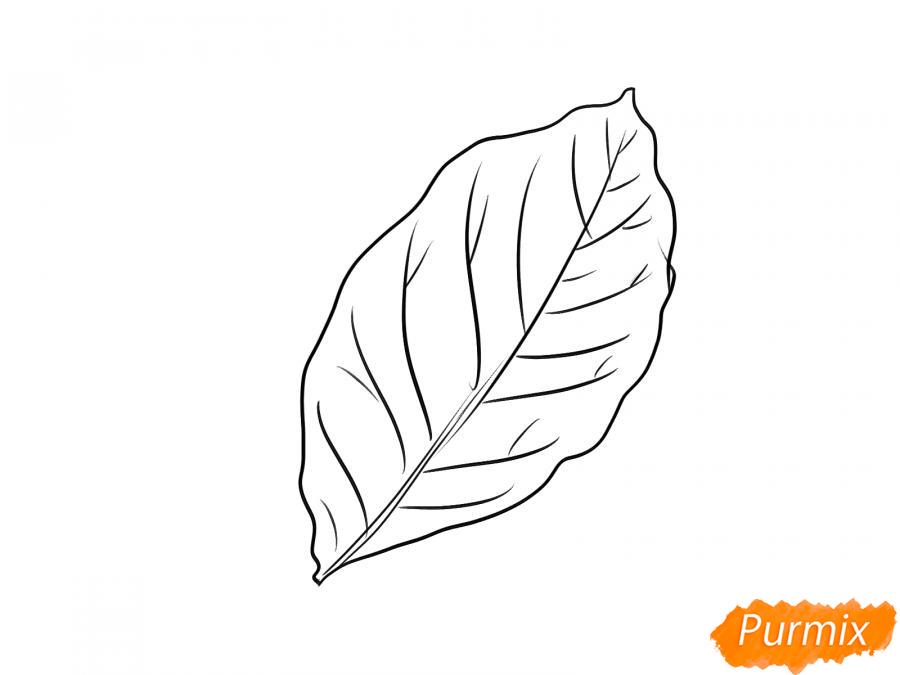 Рисуем лист ореха - шаг 4