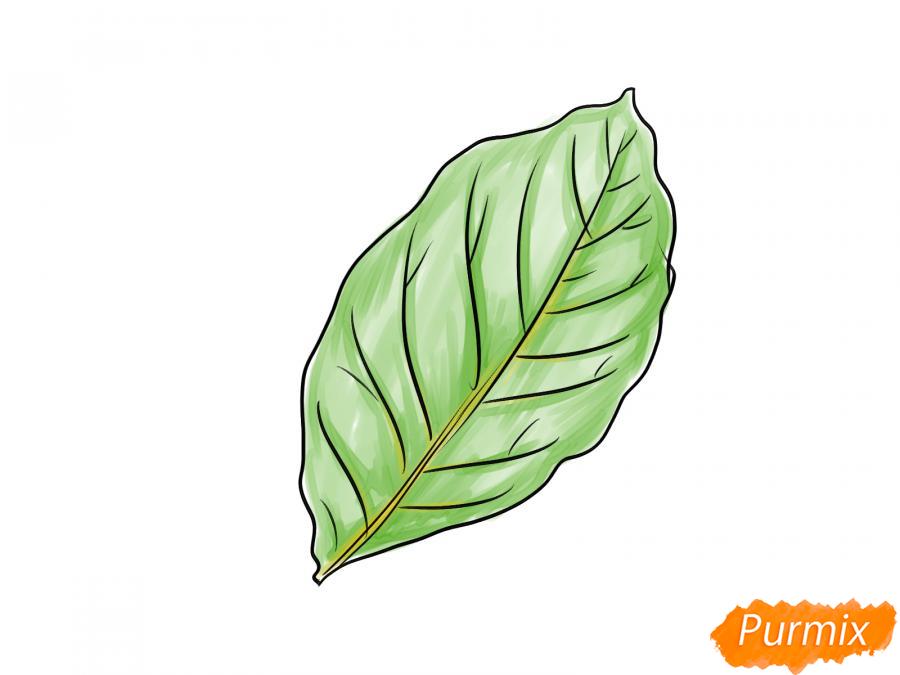 Рисуем лист ореха - шаг 5