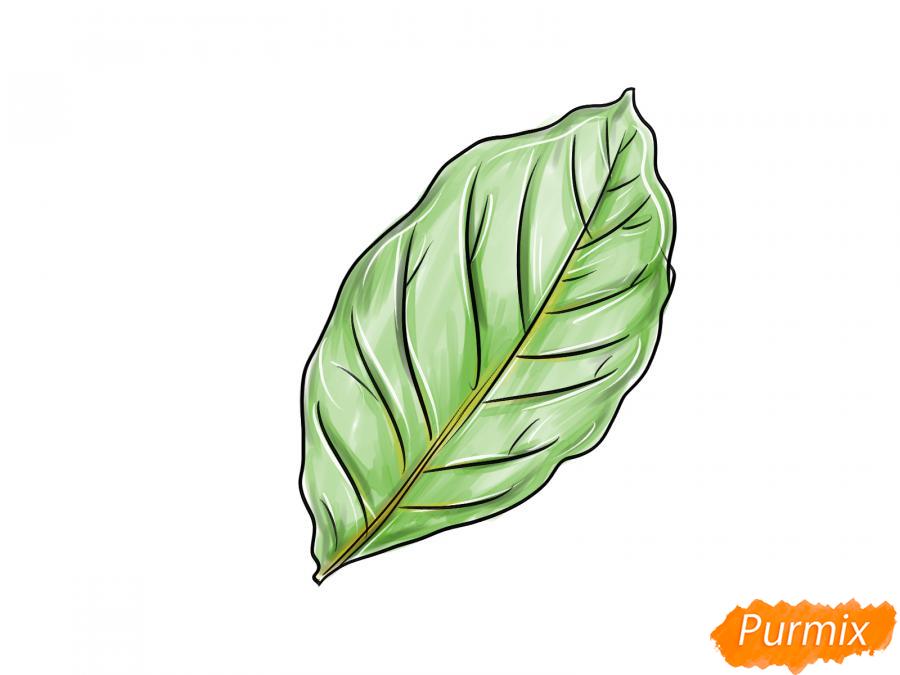 Рисуем лист ореха - шаг 6