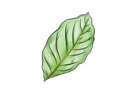 лист ореха