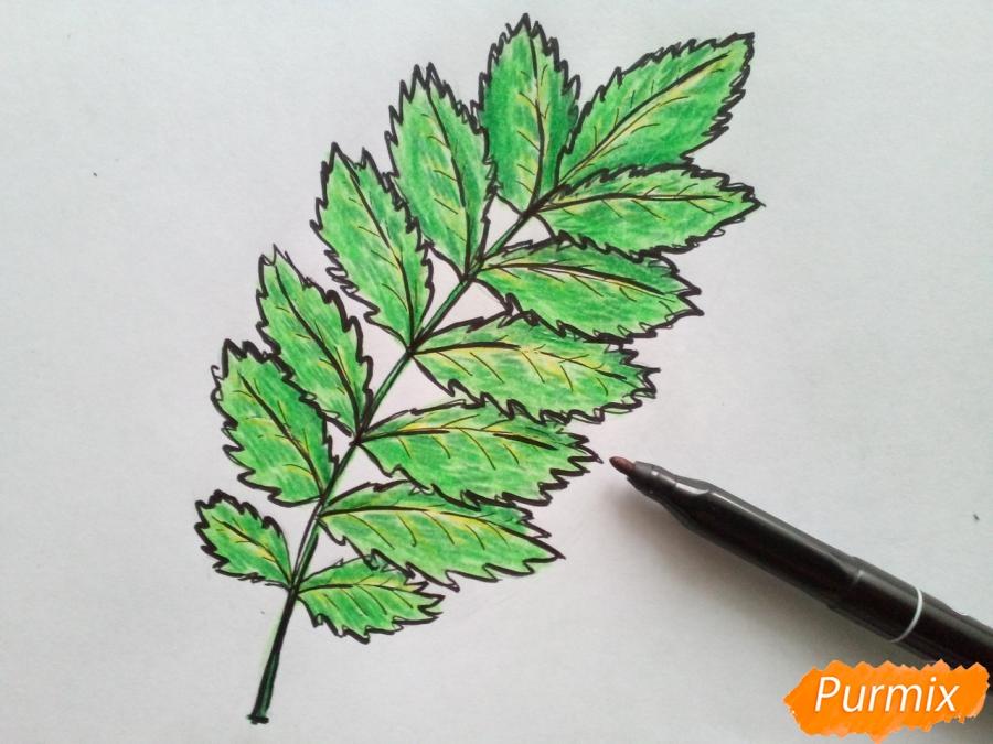 Рисуем лист рябины карандашами - шаг 5
