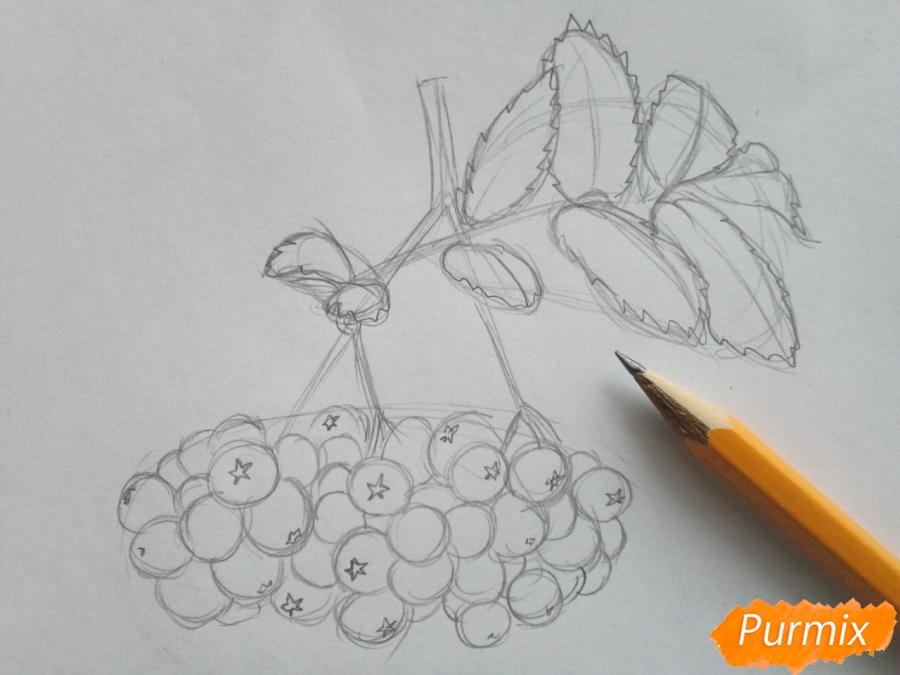 Рисуем лист рябины с ягодами - шаг 3