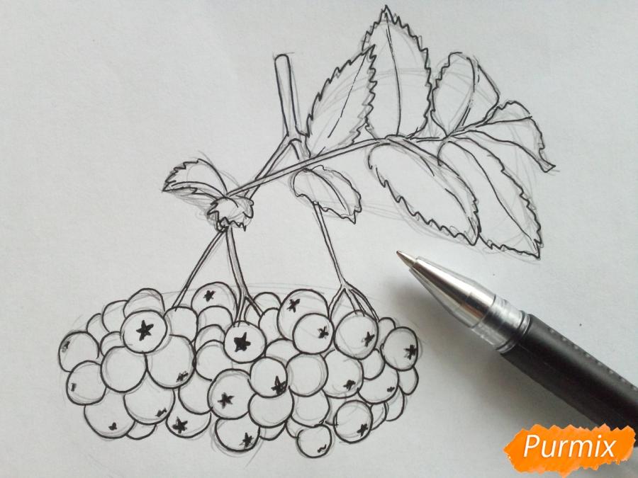 Рисуем лист рябины с ягодами - шаг 4